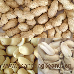 Фото: Арахис, ядра арахиса, бланшированные арахиса, жареный арахис